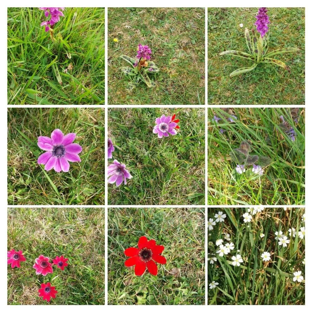 Wild Flowers on Ballard Down by Zodwa Chasokela